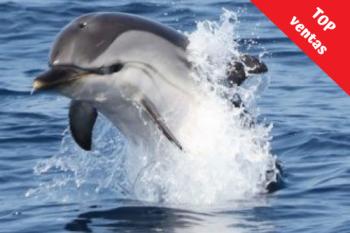 foto de delfin con top ventas de Marina Blue Avistamientos Tarifa