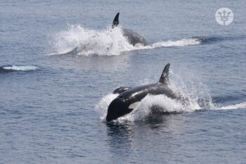tour en busca de las orcas whale watch tarifa
