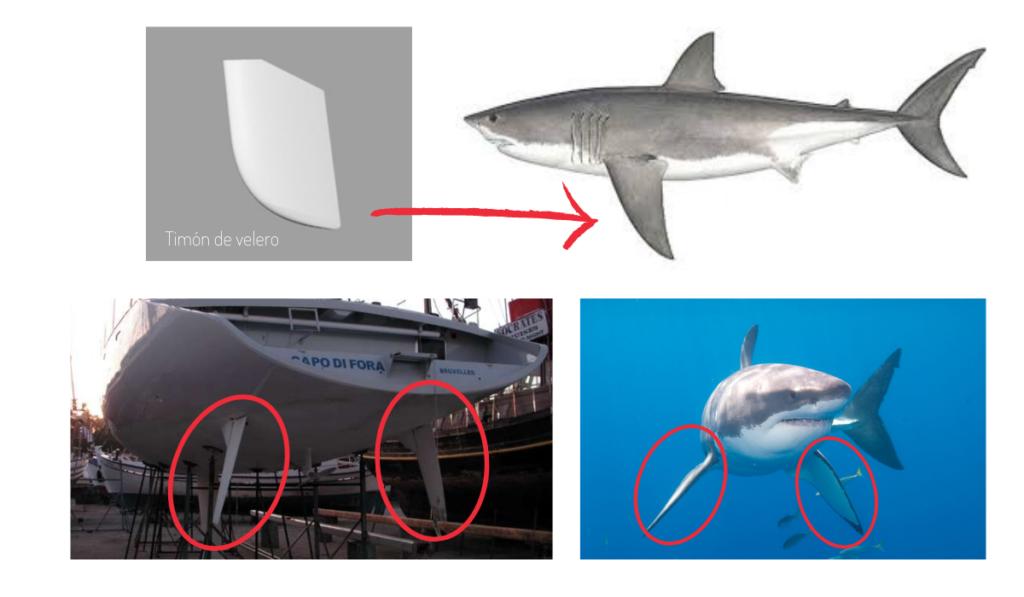fotocomposición por qué las orcas muerden el timón de los veleros marina blue avistamientos Tarifa